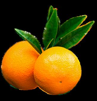 Tres naranjas en su rama
